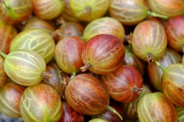 Лучшие ягоды для компота из крыжовника