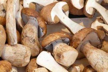 Как заморозить белые грибы