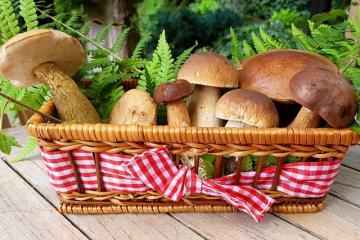 Заготовка белых грибов на зиму