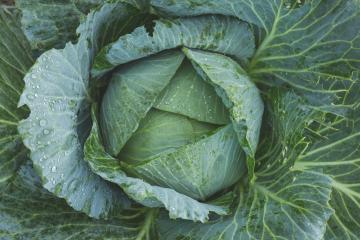 Как приготовить запеканку из капусты
