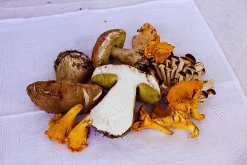Как приготовить запеканку с грибами