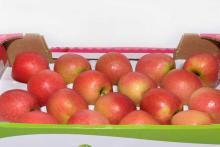 Как хранить яблоки зимой
