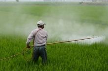 Обработка поля пестицидами
